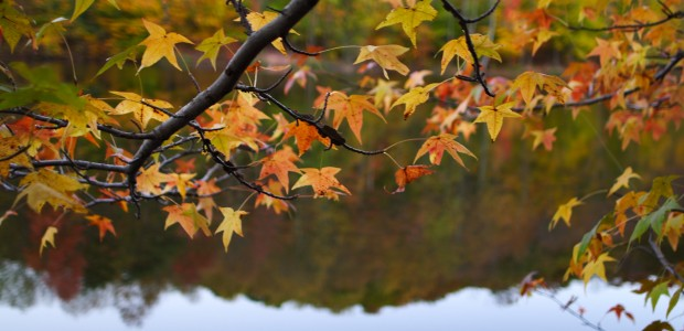 Top 22 Autumn Songs (Fall Playlist)
